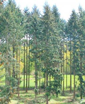Être accompagné pour la gestion de sa forêt